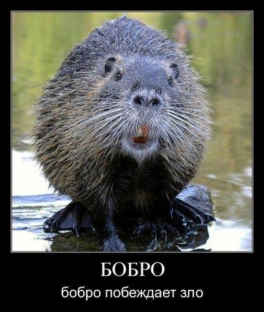http://www.perunica.ru/uploads/posts/2009-07/1248348505_1.jpg