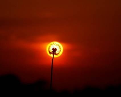 Дети Солнца