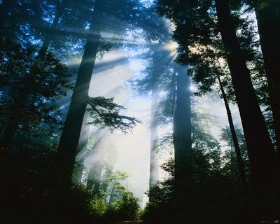 лес картинки: