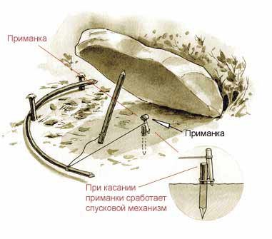 Как сделать капкан,силки ловушки