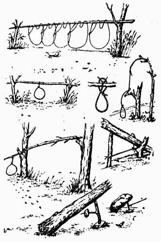 Схема ловушек для дичи
