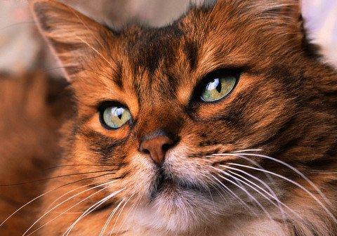 Кошкотерапия. Как кошки лечат людей