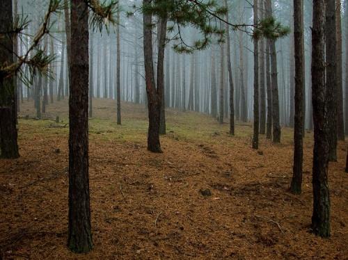 Дерево-целитель
