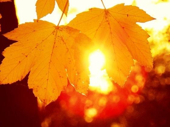 День осеннего равноденствия. РАДОГОЩЬ