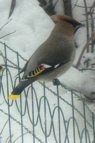 Картинки раскраски подкормка зимующих птиц