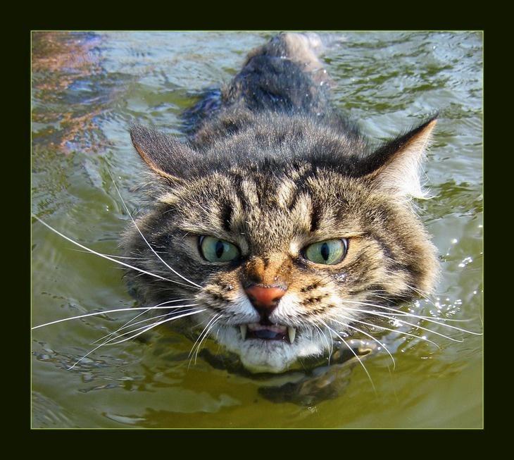 я сказал картинки котиков кухни газовой колонкой