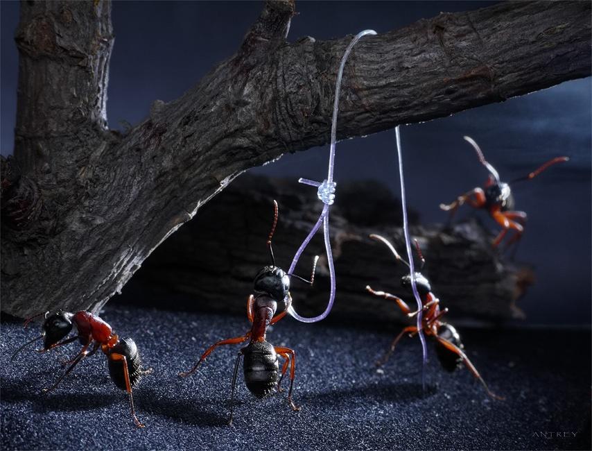 Открытки, прикольные картинки муравьи