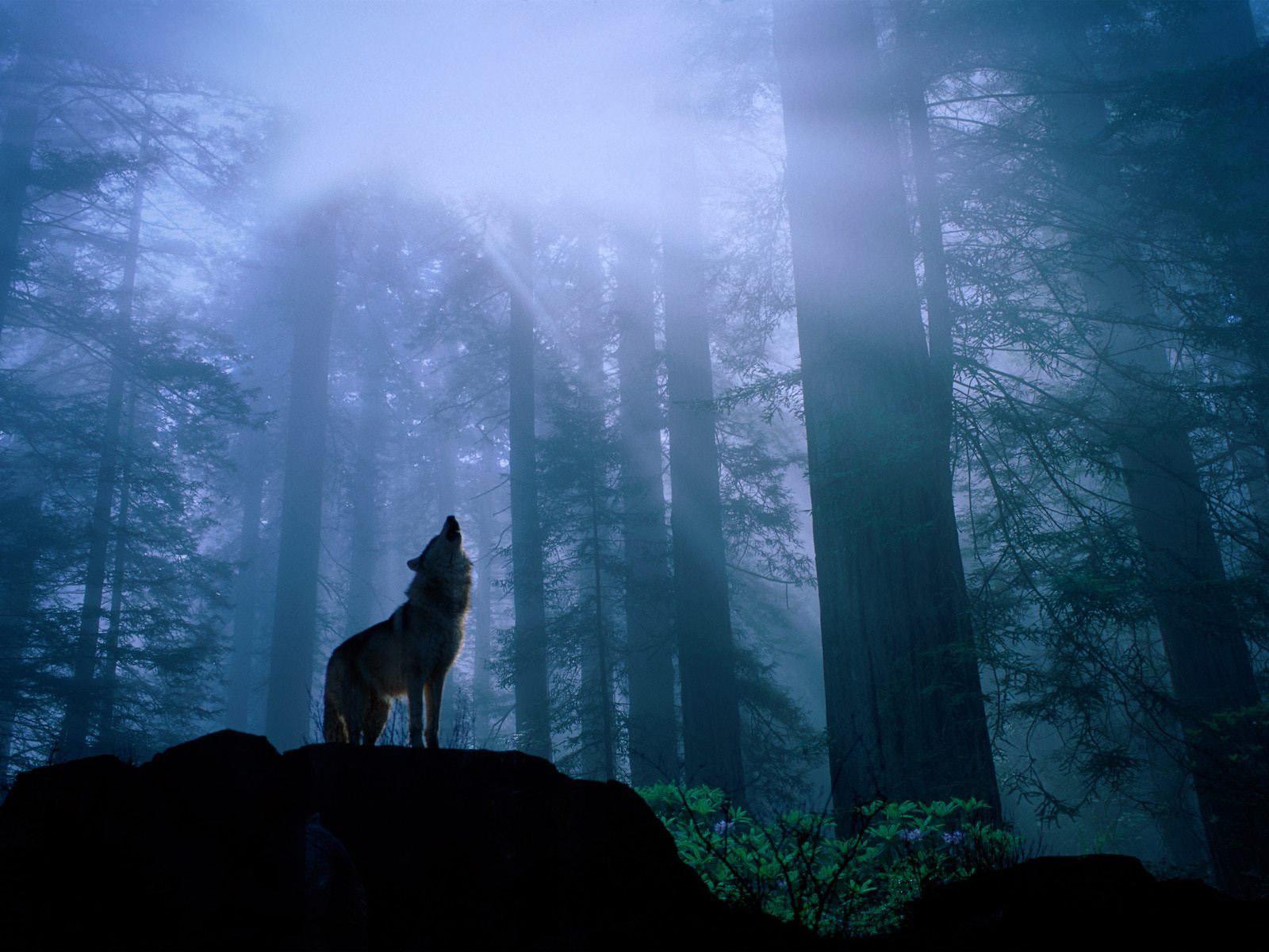Картинки одинокого леса