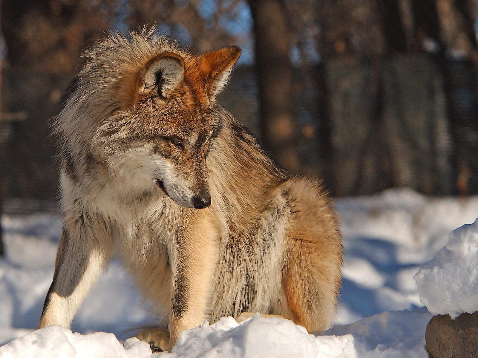 северной части животные татарстана фото с названиями этих