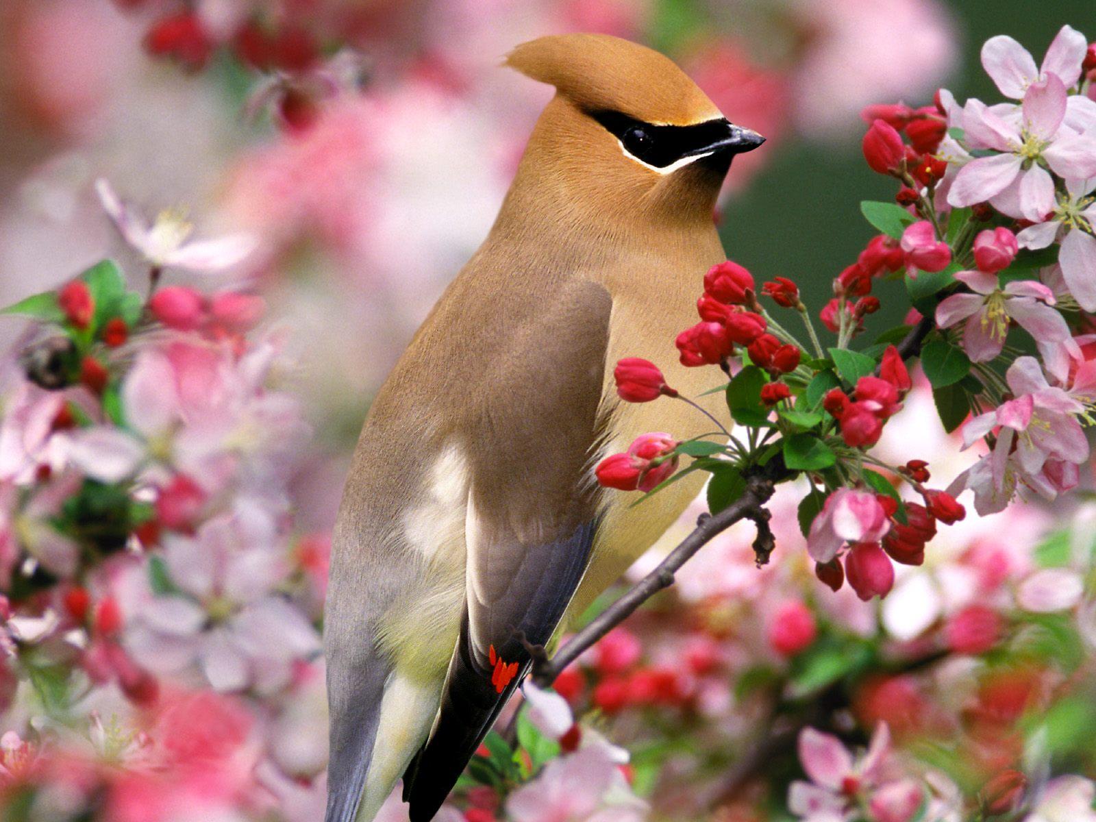 Картинки на телефон птички