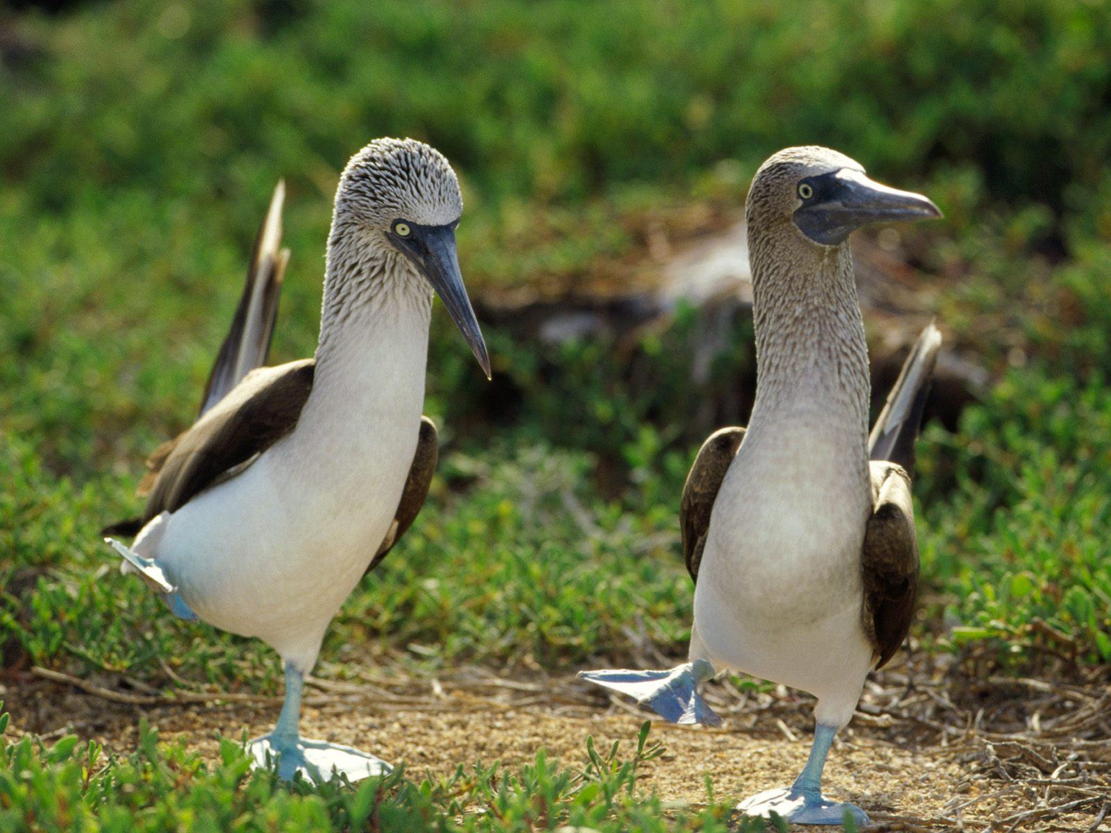 главное прикольные картинки с птицами для
