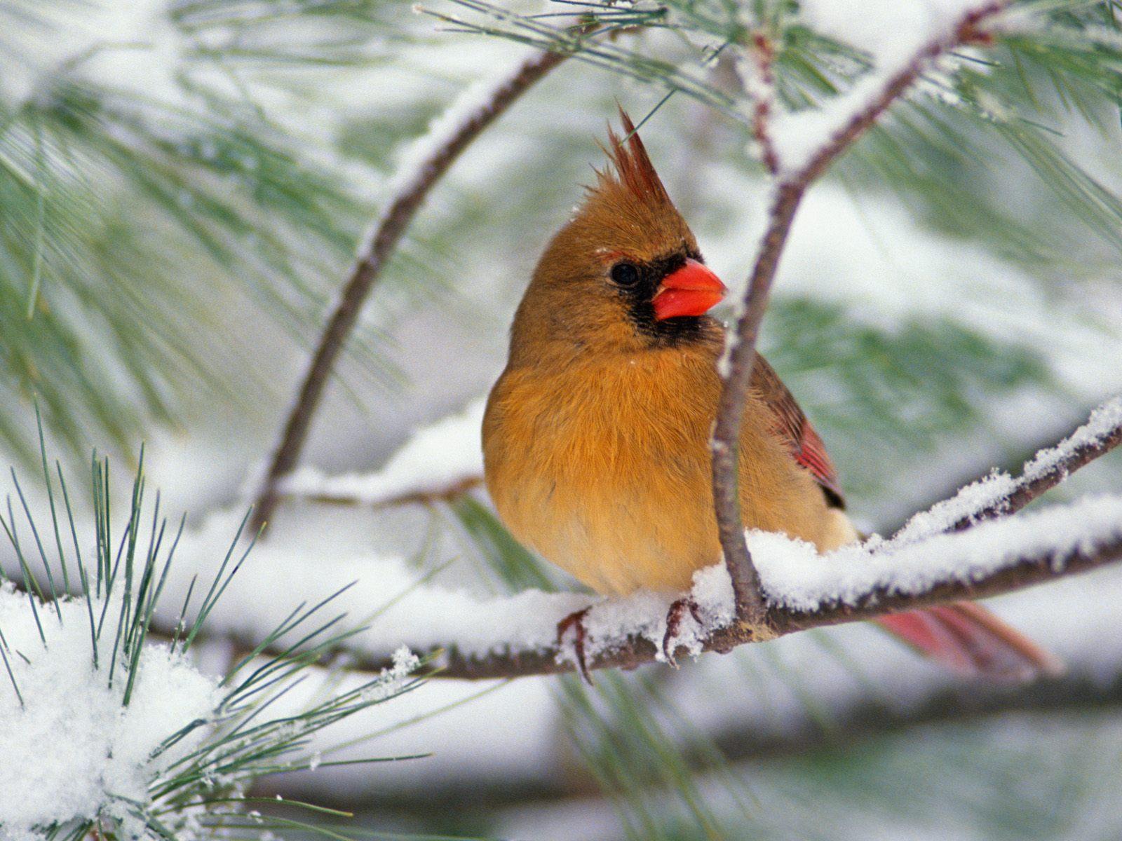 фото птиц и животных зимой приготовления стоит использовать