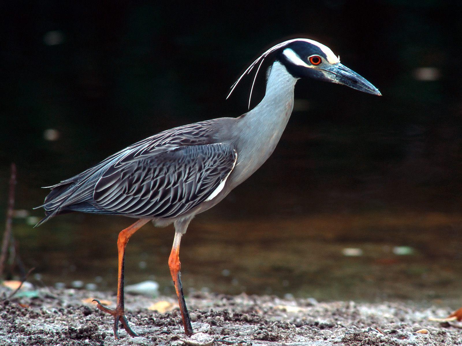 птицы и животный мир европы фото изображением такого