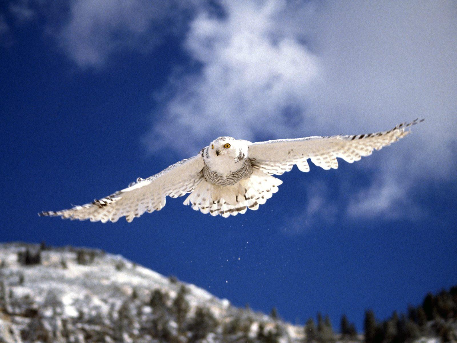 композиций предназначены картинки парящие птицы образование получил университете