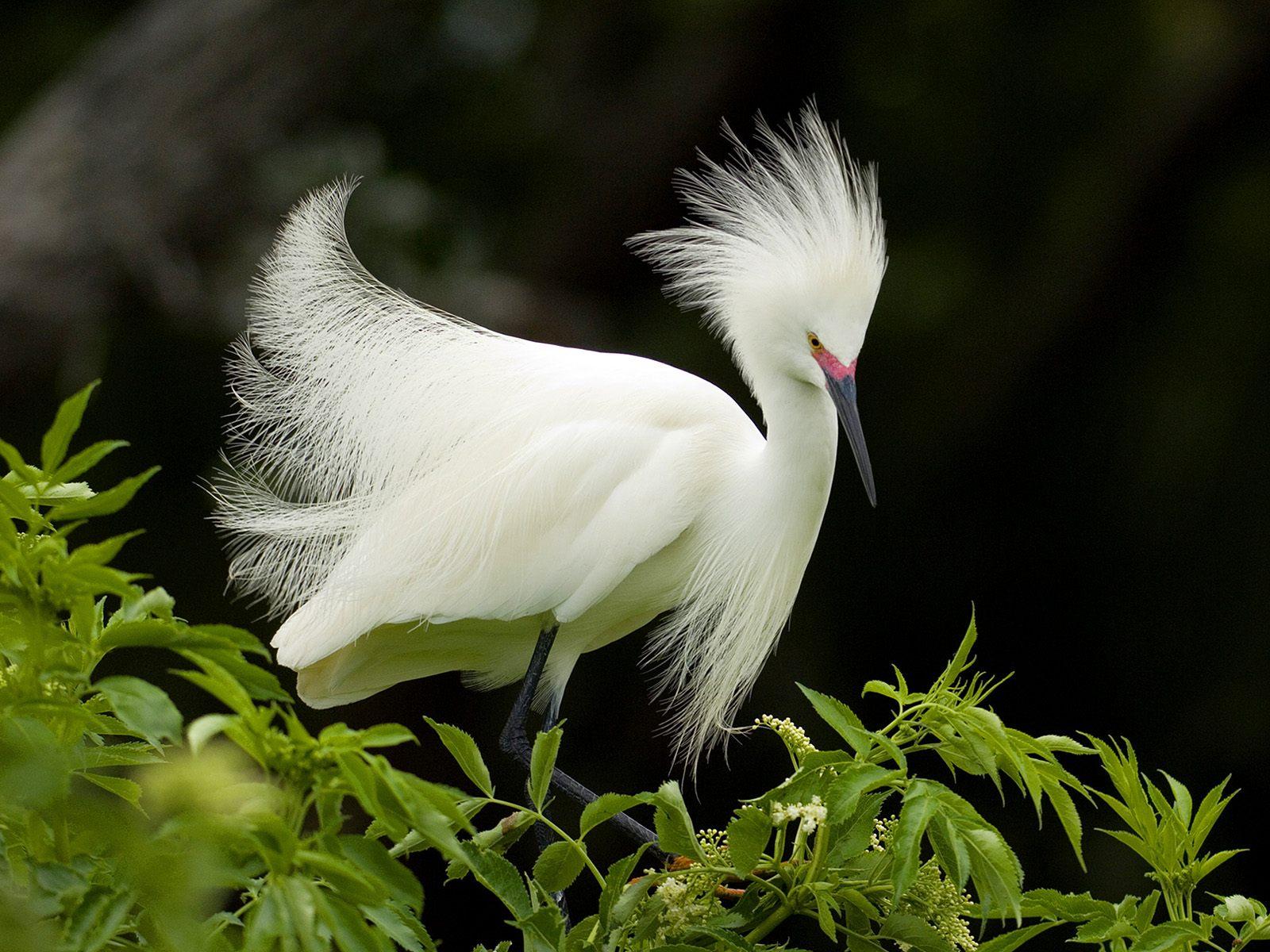 картинки редкие птицы разлетелось сети конечно