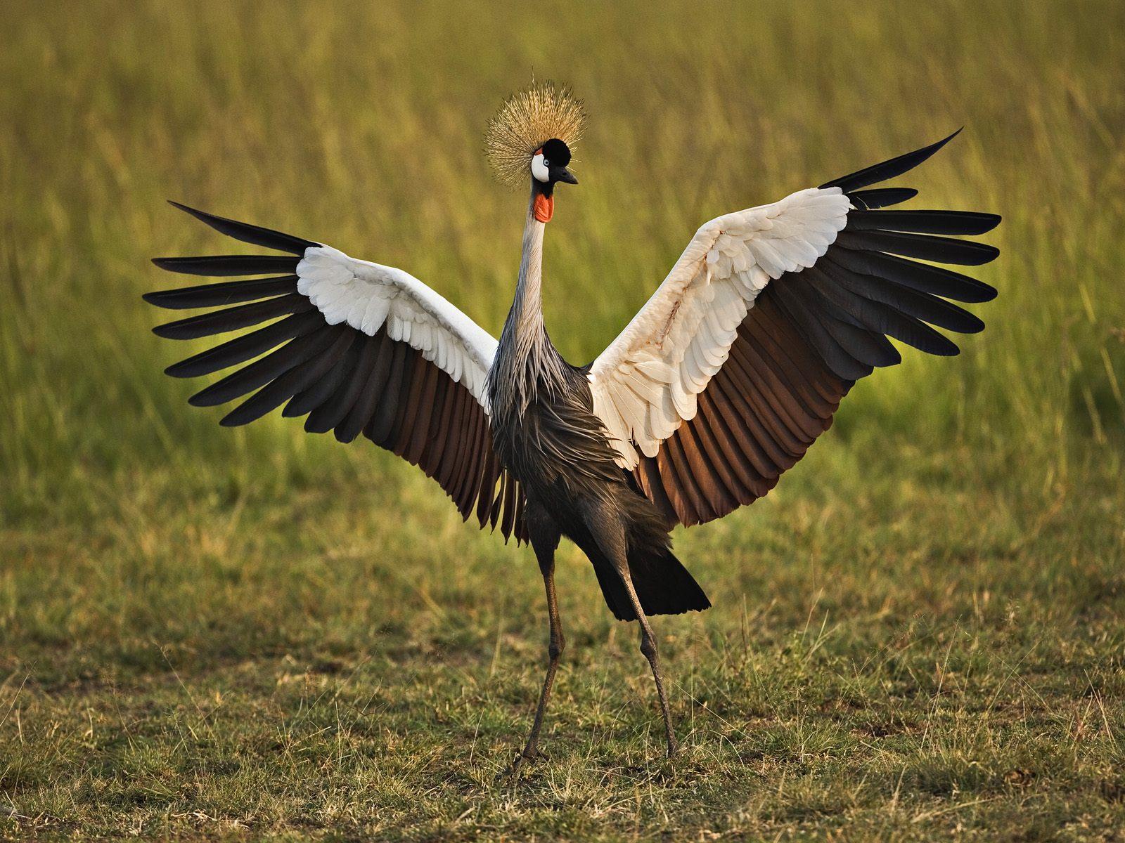 Большие птицы картинки и названия
