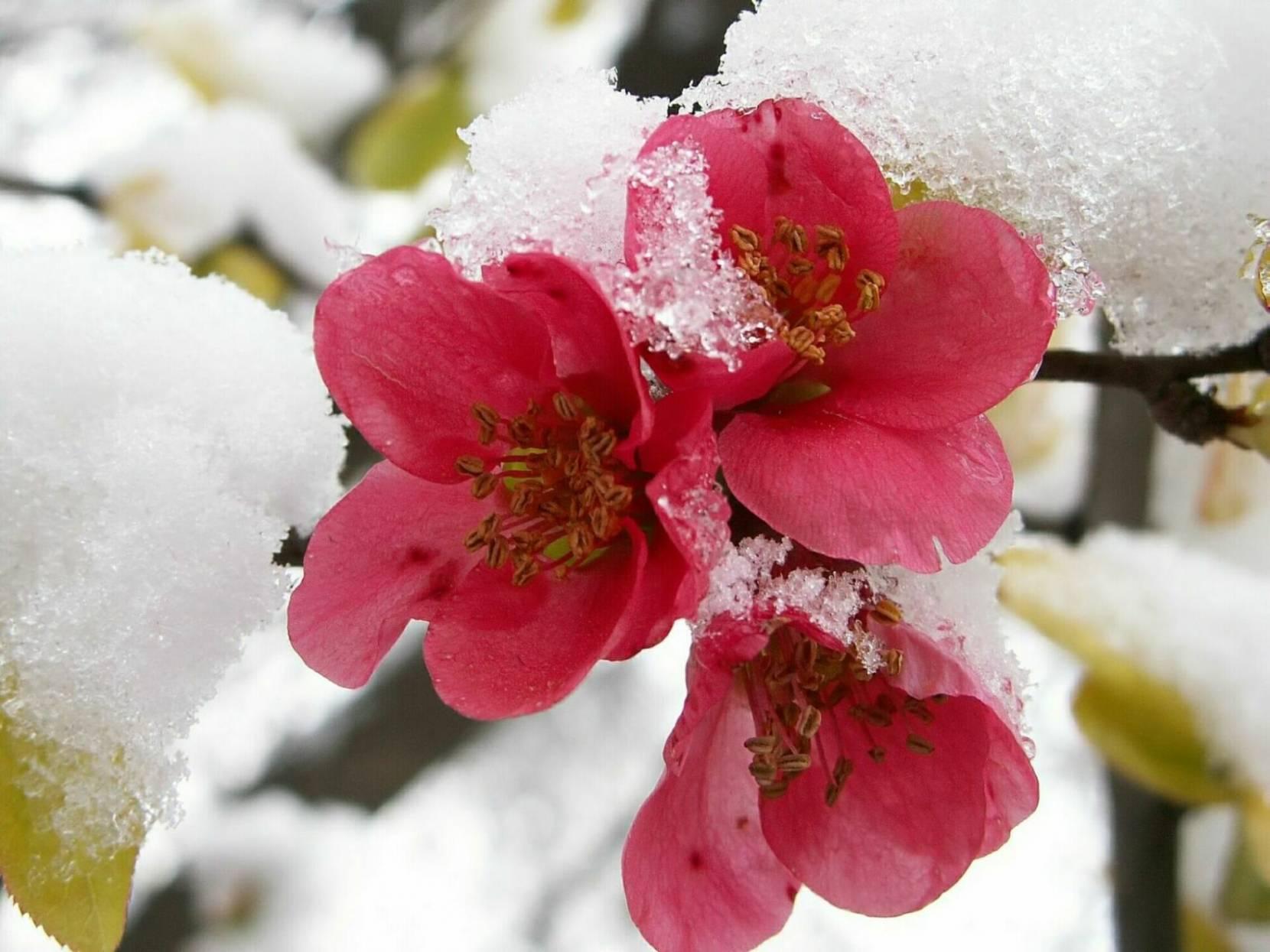 Открытка с цветами на снегу