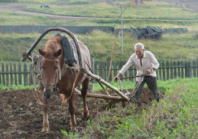 Почему выжить натуральным хозяйством в России нельзя